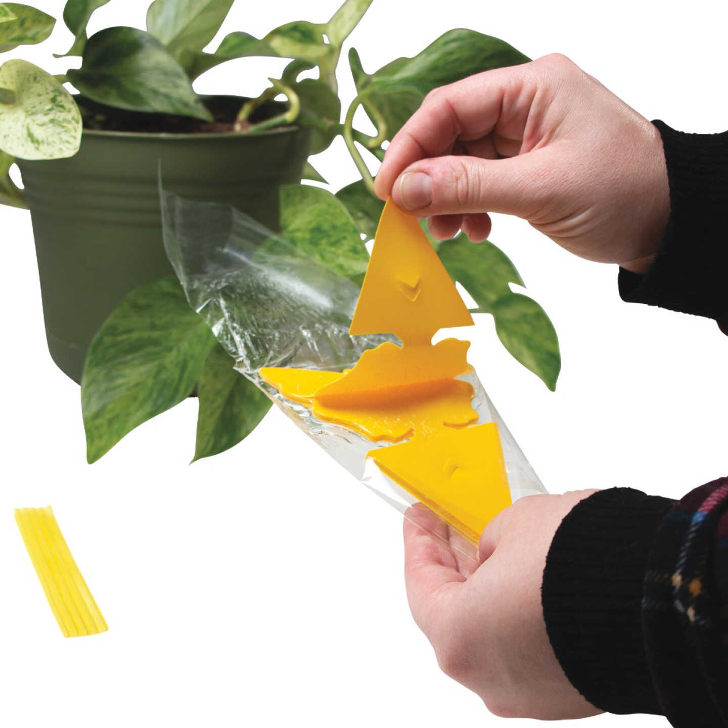 Intruder The Better Bugtrap for Plants Disposable Indoor/Outdoor Insect Trap (10-Pack) Image 3