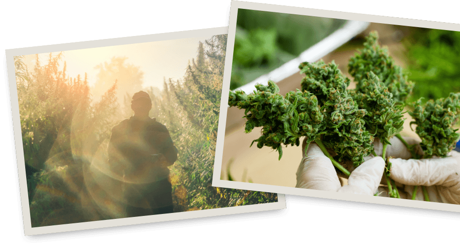 Get growing with Dazey's